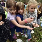 Annual butterfly release held at Sarah J. Dymond Elementary School in Harding for the last time